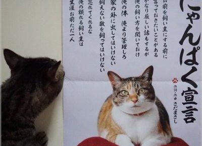 にゃんぱく宣言 CM 猫 種類